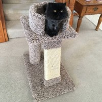 Kings Throne - Cat Stand